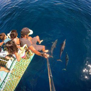 plywanie z delfinami 300x300 - plywanie_z_delfinami